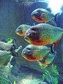 Rainforest exhibit3 - Aquarium of the Americas July 2007.jpg