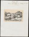 Rana paradoxa - 1700-1880 - Print - Iconographia Zoologica - Special Collections University of Amsterdam - UBA01 IZ11500013.tif