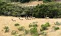 Rancho Vierra Oak Woodland (18474611613).jpg