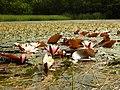Ratajské rybníky 01.jpg