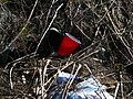 Red Plastic Cup (33925091012).jpg