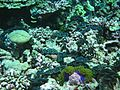 Reef2313 - Flickr - NOAA Photo Library.jpg