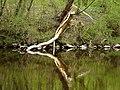 Reflection - Flickr - Stiller Beobachter.jpg