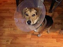 Image Result For Kennel For Beagle