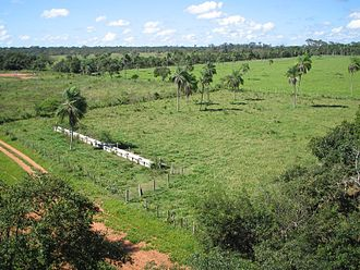 Typical landscape in the Chiquitania Region de los Llanos San Ignacio Santa Cruz Bolivia.jpg