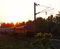 Relagadi Indian rail.jpg