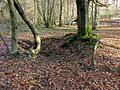 Remains of Sawpit, Bottom Wood - geograph.org.uk - 104422.jpg