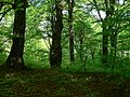 Rezerwat Ostra Góra Polska 24.jpg