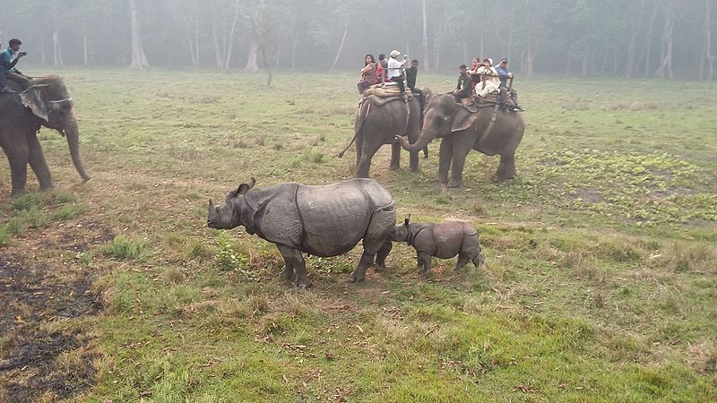 Bestand:Rhino's in Chitwan National Park.jpg
