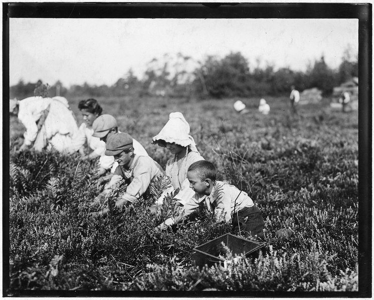 File:Richard Tevor, 8 years old. 5 years picking cranberries. Theodore Budd's Bog at Turkeytown, N.J. This is the fourth... - NARA - 523258.tif