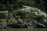 River Stone D.JPG