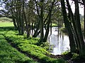 River Stour after heavy rain - geograph.org.uk - 1568733.jpg