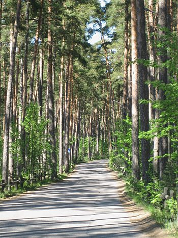 English: A road at the Kallahti nature conserv...
