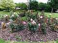 Rose garden, Hereford - DSCF1974.JPG