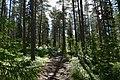 Rovaniemi, Finland (14) (35875919533).jpg
