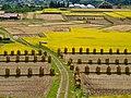 Rural footpath (10835903875).jpg