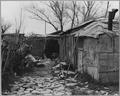 Sacramento, California. Home in Louis' Camp - shows effort toward neatness and order. - NARA - 521729.tif