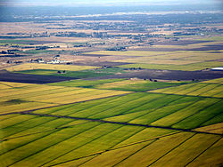 Sacramento rice fields.jpg