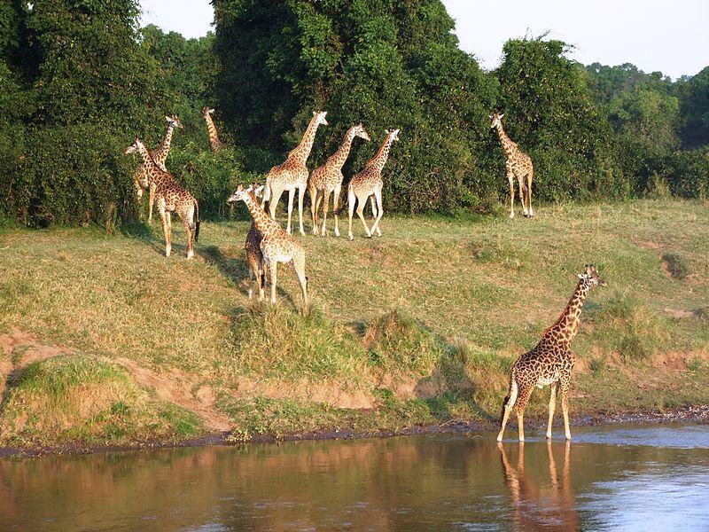 File:Safari in Kenia am Mara Timbo Camp, Masai Mara.JPG
