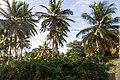 Samaná Province, Dominican Republic - panoramio (41).jpg