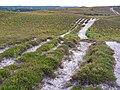 Sandy heathland on Ogden's Purlieu, New Forest - geograph.org.uk - 236865.jpg