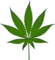 Sativa leaf.png