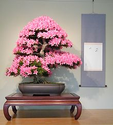 Merveilleux Satsuki Azalea In Informal Upright Style On A Bonsai Display Table With A  Rectangular Tabletop