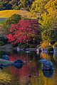 Scenery of Shinji pond at Expo'70 Commemorative Park in Osaka.jpg