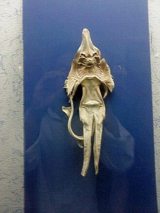 Jenny Haniver - Image: Sea devil Mashhad museum