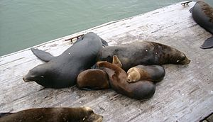 Seven sea lions sleeping on a wooden platform next to the water. There're two dark-brown individuals, and three smaller and lighter-colored individuals, all sleeping on top of one another. The other two are cut-off in the image.