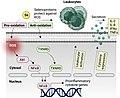 Selenium and anti-tumour immunity.jpg