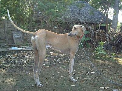 Kanni - Wikipedia