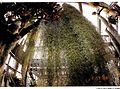 September Botanischer Garten Berlin - Botany Photography 1989 - panoramio (5).jpg