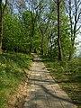 Serock, Jadwisin, cesta kolem jezera.JPG