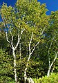 Short Hike (6) (9704317677).jpg