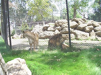 Six Flags Discovery Kingdom - Image: Six Flags Discovery Kingdom Lions