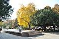 Skver-Shevchenka-14103589.jpg