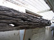 Sleeper damaged by termites.jpg