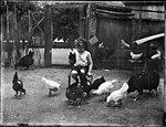 Small boy holding a hen (3072375815).jpg