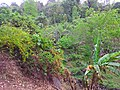 Snap from Peechi Forest area 140409.jpg