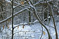 Sneeuw in Meerdaalbos - 373065 - onroerenderfgoed.jpg