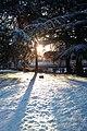 Snow @ Supélec - panoramio.jpg