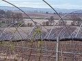 Soft Fruit Farms near Coupar Angus - geograph.org.uk - 409429.jpg
