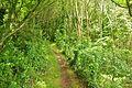 South West Coast Path on Boskenna Cliff (7238).jpg