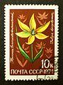Soviet stamps 1974 10k Tulipa dasystemon.JPG
