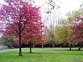 Special autumn colors.JPG