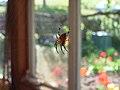 Spinne in Netz.jpg