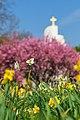 Spring Colours, 1804221138, ako.jpg