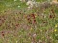 Spring Field (249665777).jpeg