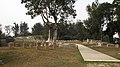 Stanley Military Cemetery 02.JPG